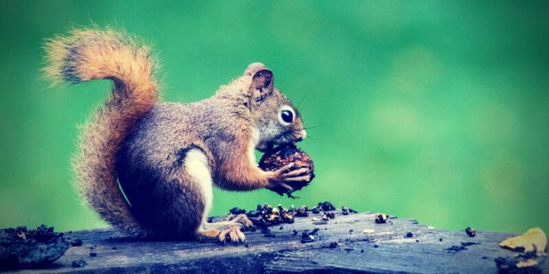 Was du von Eichhörnchen über Altersvorsorge lernen kannst